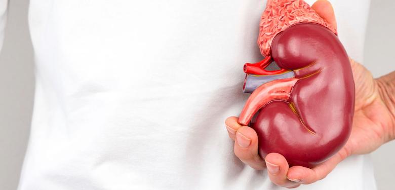 España líder mundial en trasplantes...