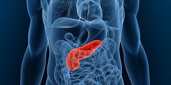 Una molécula que puede evitar las metástasis en el cáncer de páncreas...