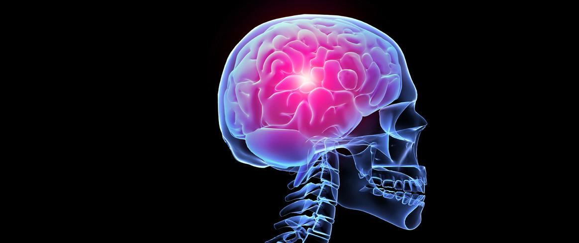 El gen responsable del envejecimiento cerebral...