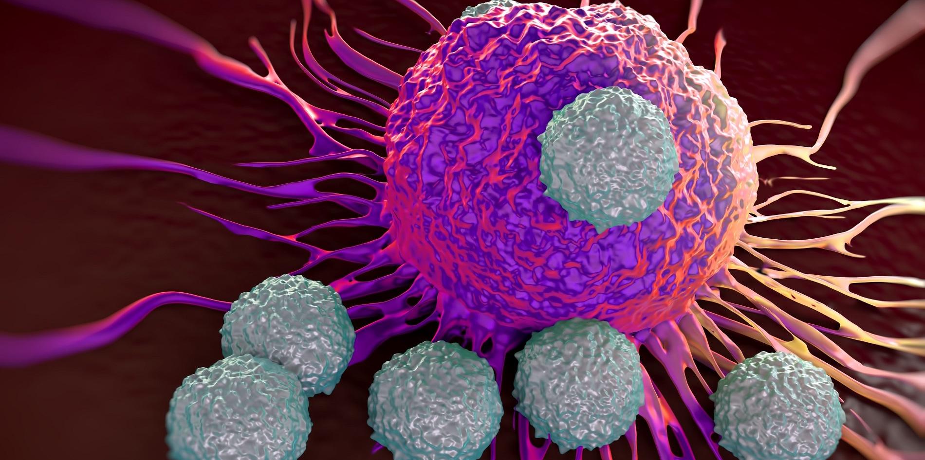 En busca de una pastilla para eliminar las células dañadas...