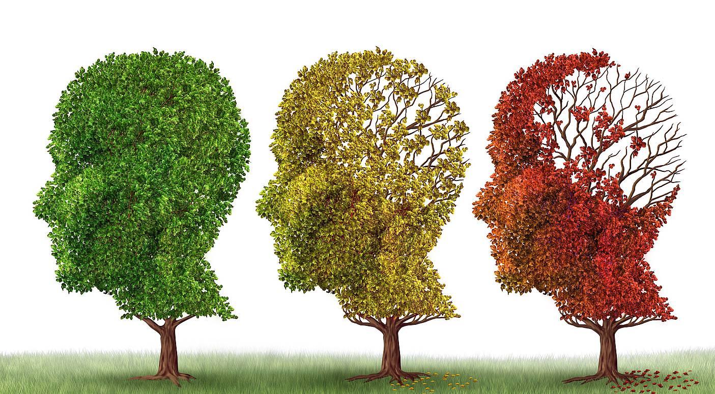 Nuevo descubrimiento que podría revertir la pérdida de la memoria por el Alzheimer...