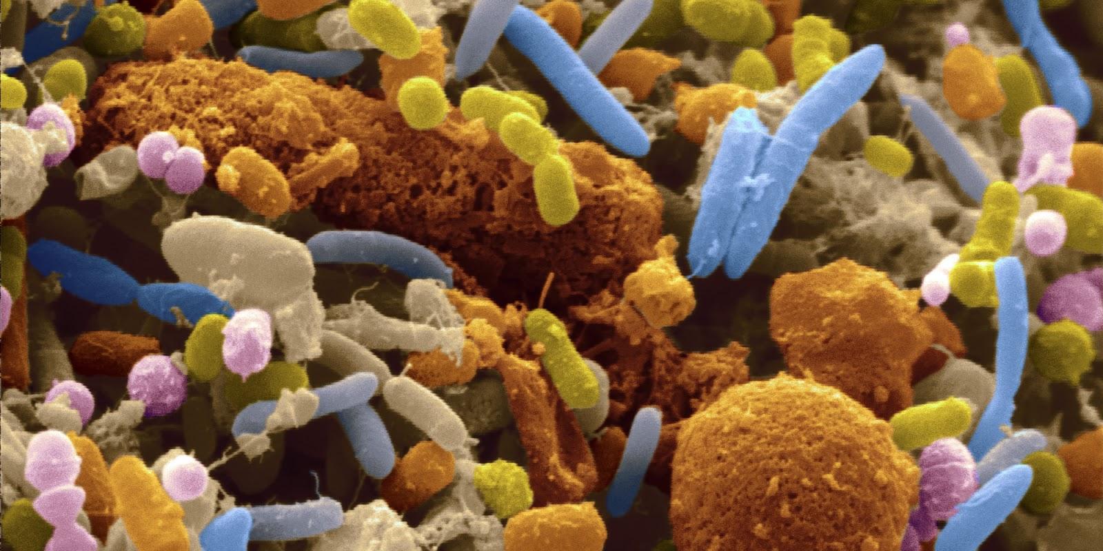Las reacciones emocionales están relacionadas con las bacterias intestinales...