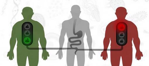 Trasplante fecal para prevenir la diabetes en personas obesas...