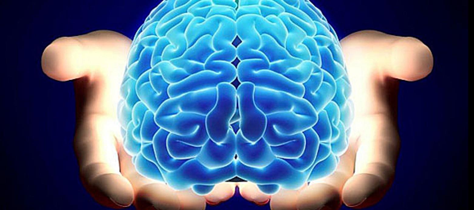Atlas de la vasculatura cerebral para saber más sobre las enfermedades del cerebro...