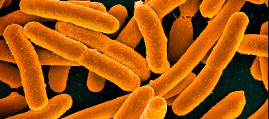 Gut bacteria drive autoimmune disease...