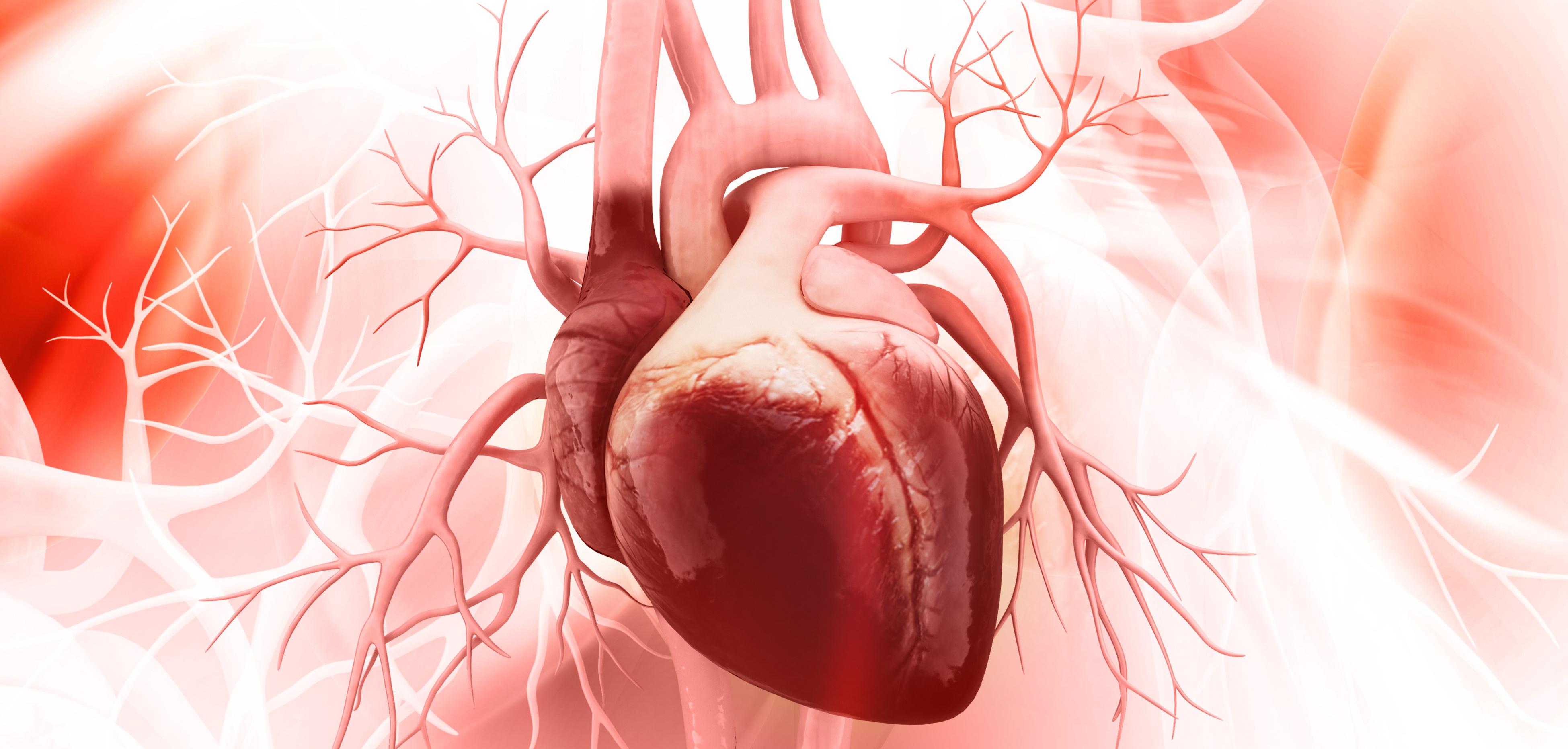 Proteina identificada que ayudará a prevenir la insuficiencia cardiaca...