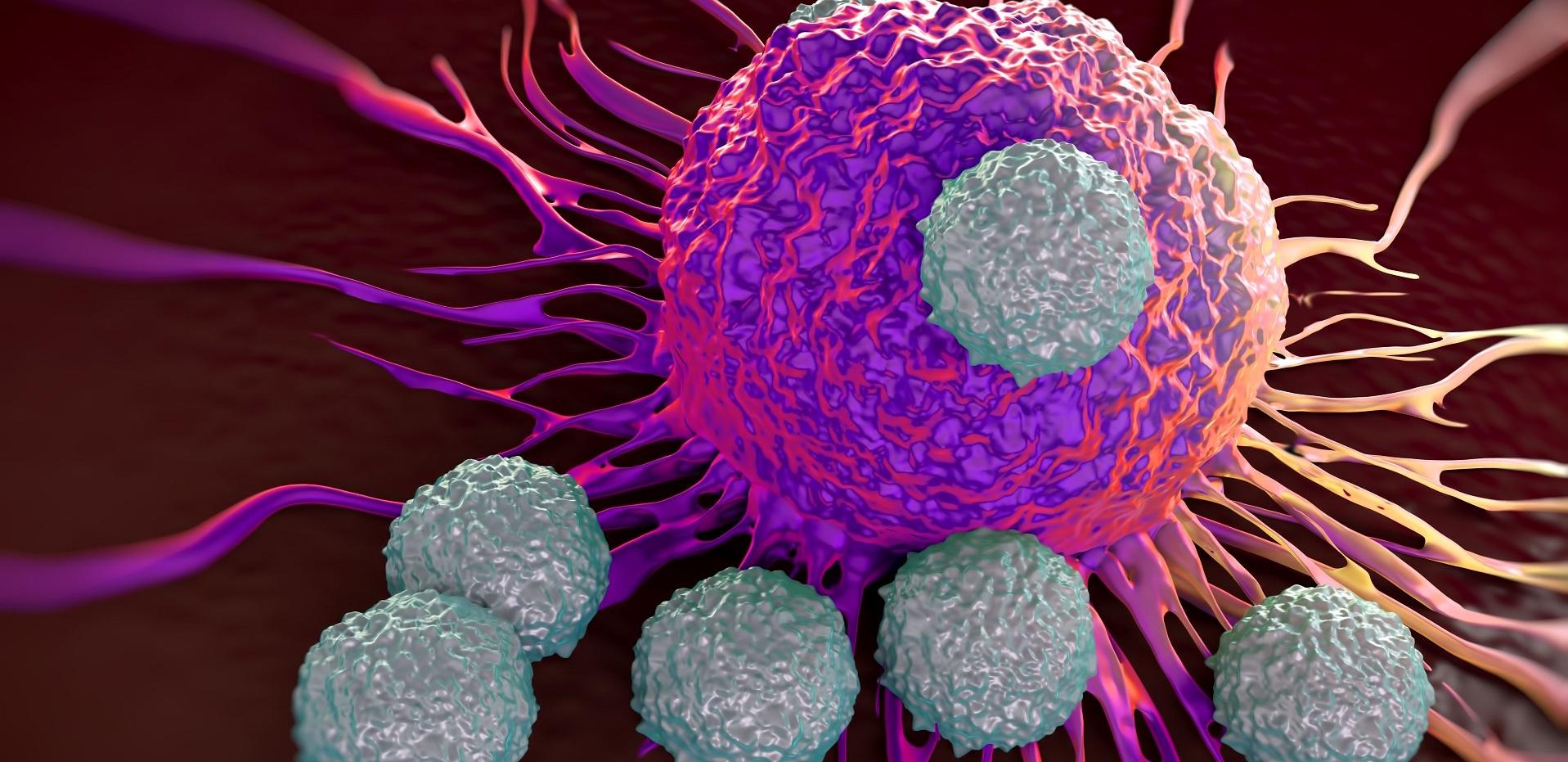 Vall d´Hebron descubre cómo atacar células tumorales durmientes...