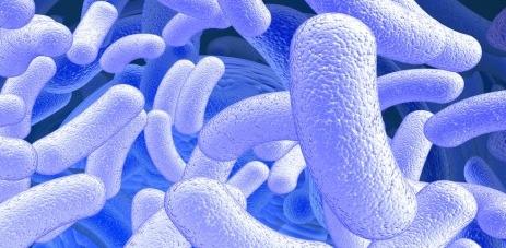 La microbiota intestinal, un escudo protector...