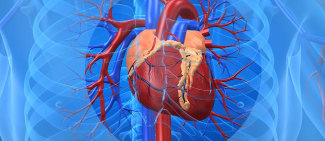 Terapia con células madre restaura la insuficiencia cardíaca...