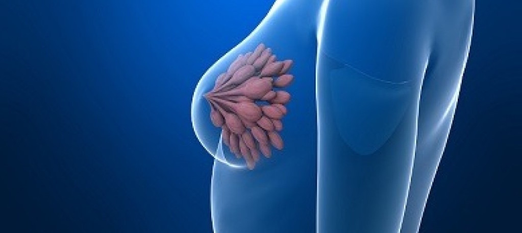 El primer indicador de pronóstico del cáncer de mama más agresivo...
