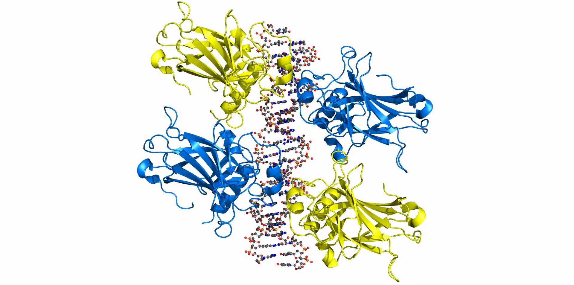 La proteína p53 puede actuar como una nueva diana terapéutica contra la obesidad...