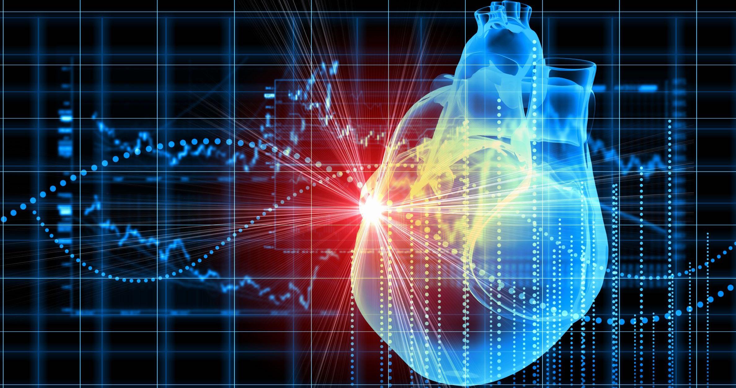 Un estudio demuestra que los corazones adultos no contienen células madre...