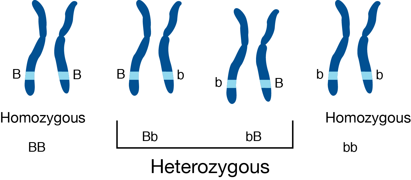 Heterozygous mutations cause genetic instability in a yeast model of cancer evolution...