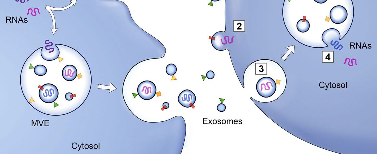 Exosomes transfer inflammasome activation...