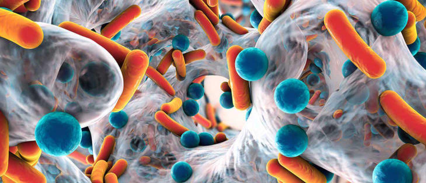 Identificadas dos bacterias intestinales que influyen en la salud mental...