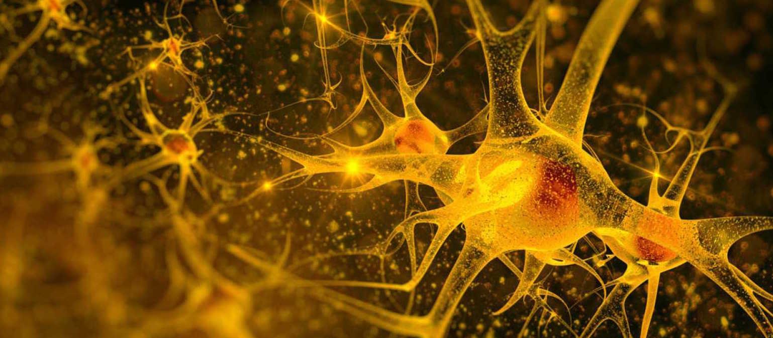 Favoreciendo la formación de neuronas...