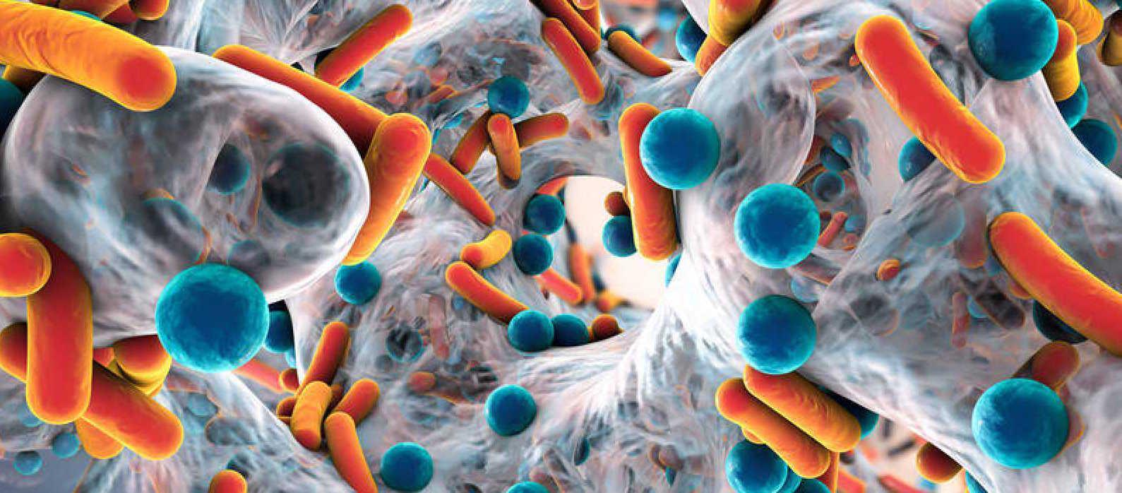 Las bacterias del intestino condicionan que un medicamento funcione...
