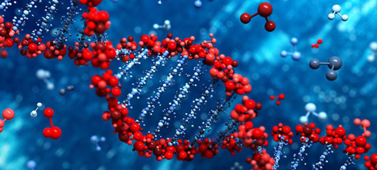 Nueva técnica visualiza cómo interactúan los genes para formar órganos y tejidos...