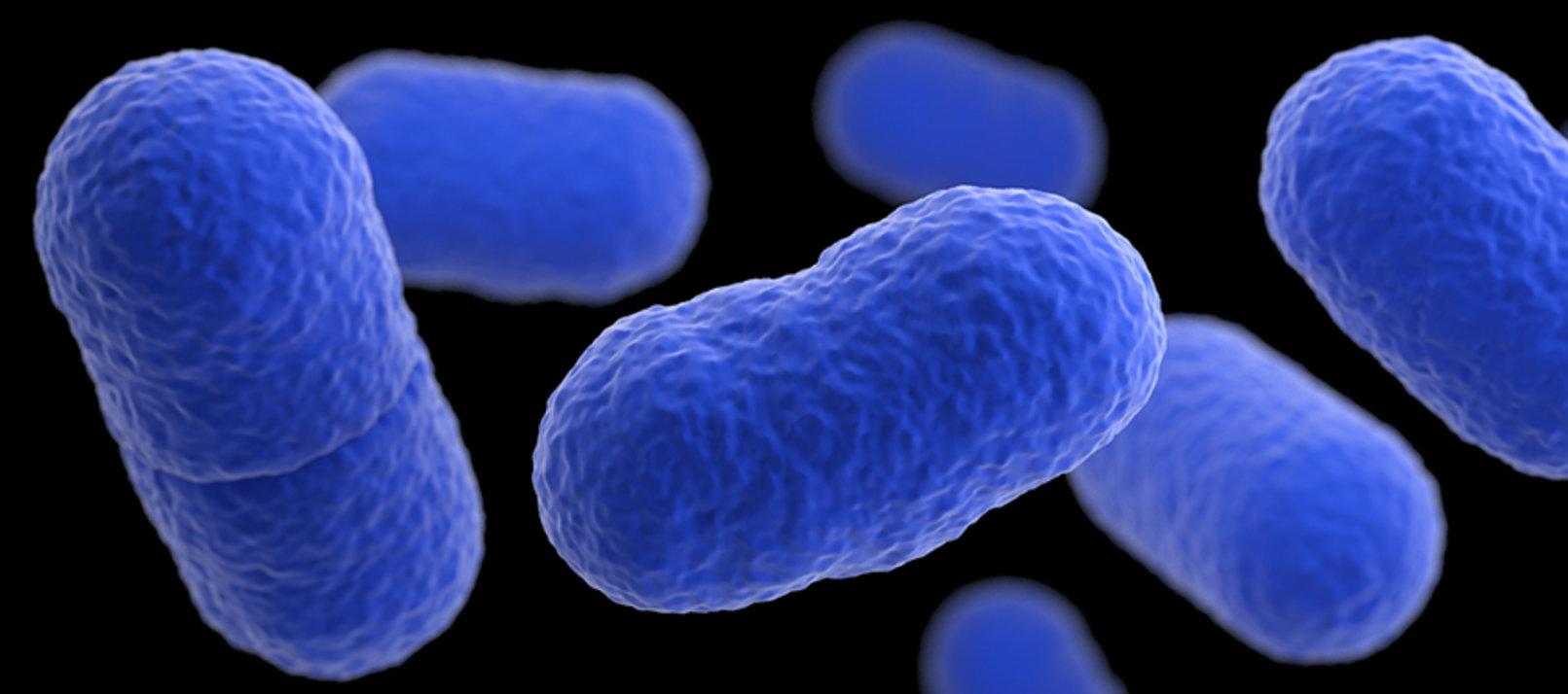 Alertan del incremento en España de los casos de Listeria, la bacteria más letal de los alimentos...