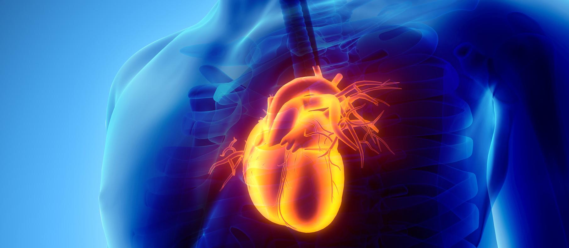 Un nuevo modelo predice evento cardíaco durante toda la vida...