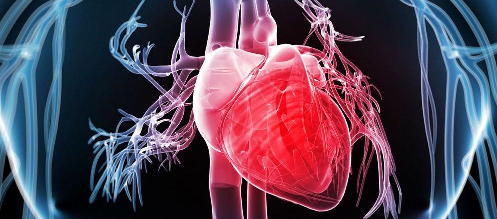 Nueva célula que podría curar el corazón...
