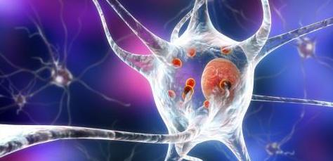 La neuromelanina, una diana prometedora para tratar el parkinson...