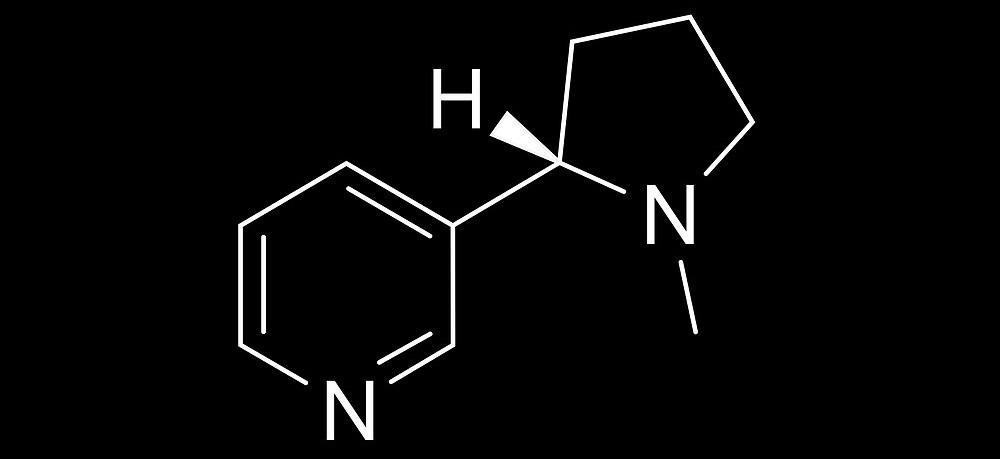 Nuevos usos terapéuticos de la nicotina frente a la obesidad...