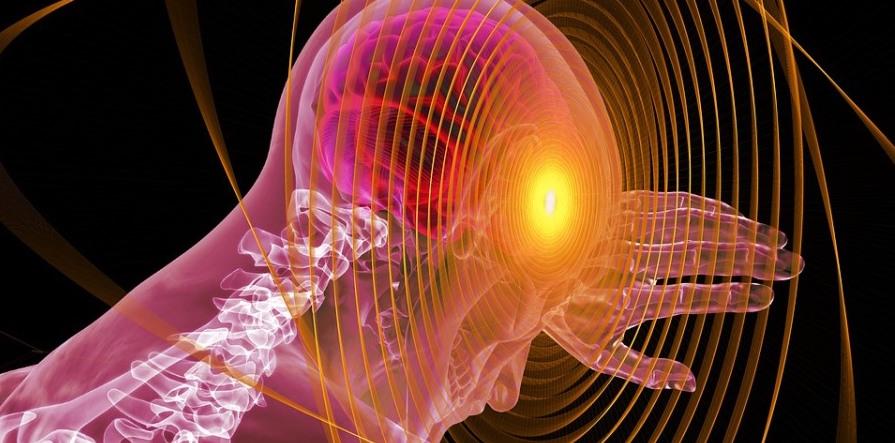 Científicos españoles de la Universidad de Murcia descubren cómo neutralizar el cáncer cerebral ...
