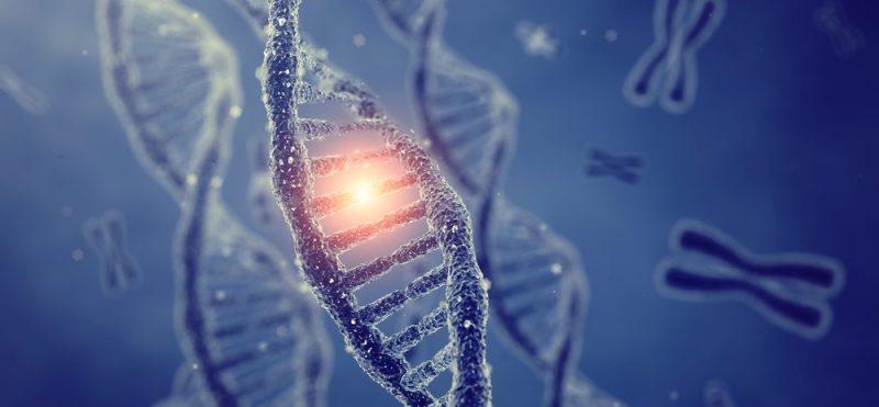 Descubren mutaciones en un gen no codificante presentes en varios tipos de cáncer...