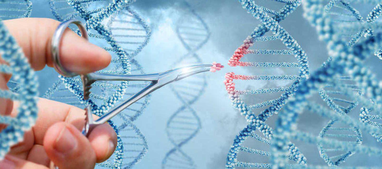 Desarrollan el sistema de edición genética más preciso hasta el momento...