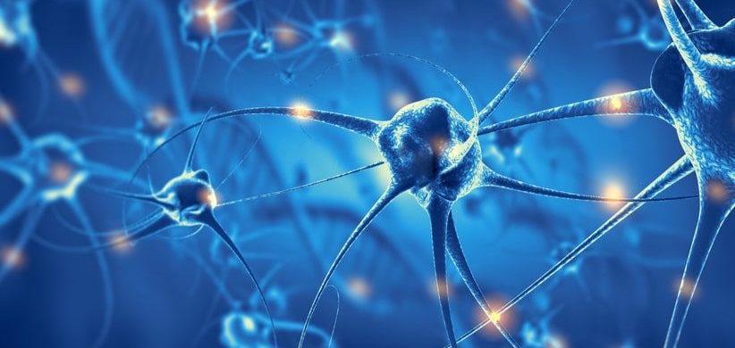 Hallan un mecanismo que asocia diabetes y desarrollo de enfermedades neurodegenerativas...