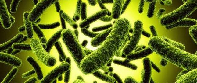 Una bacteria común en el intestino genera mutaciones que llevan al cáncer colorrectal...