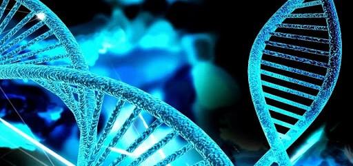 El primer estudio de edición genética en pacientes con cáncer muestra que la técnica es segura y...