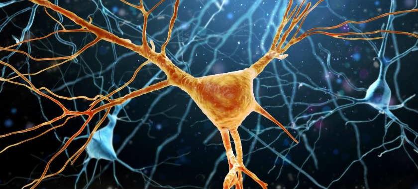 Identifican una potencial nueva diana para la esclerosis lateral amiotrófica...