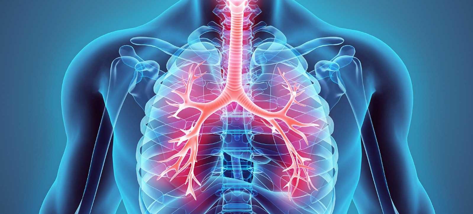 Una técnica recupera pulmones humanos dañados para su uso en trasplantes...