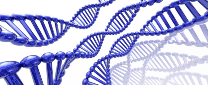 El CRG se suma a un nuevo centro de investigación del genoma liderado por Harvard...