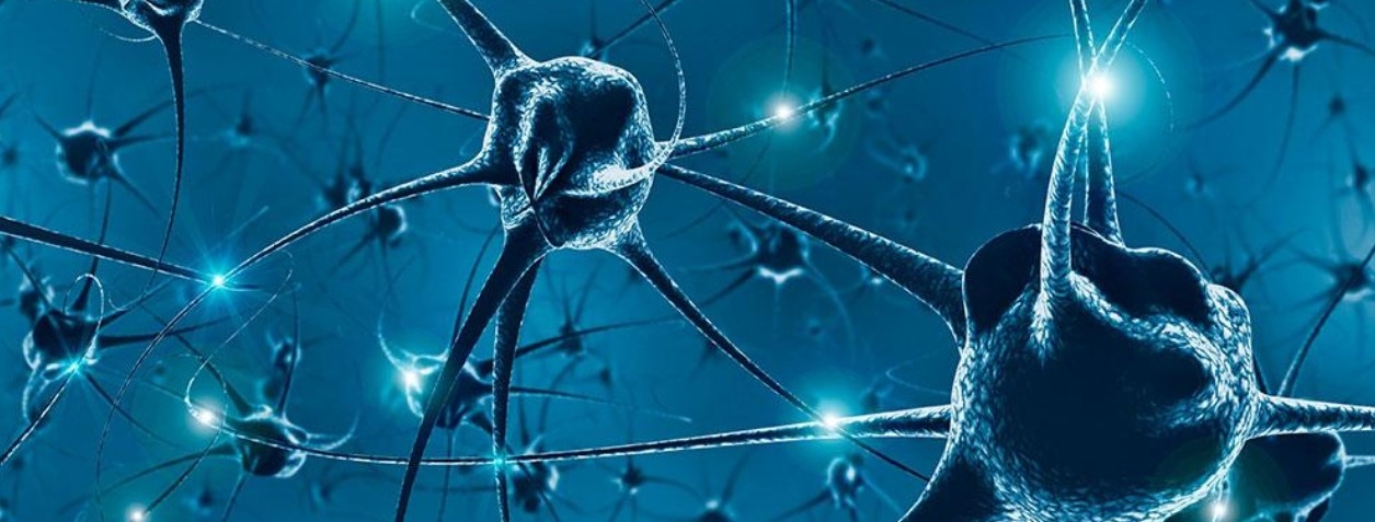 Demuestran la existencia de células madre en el hipocampo que permiten producir neuronas durante to...
