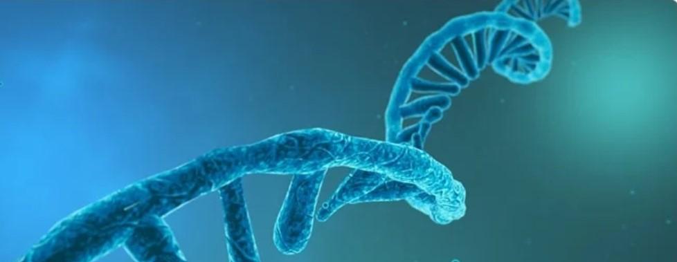 De las vacunas contra la covid al cáncer: la revolución terapéutica del ARN mensajero...